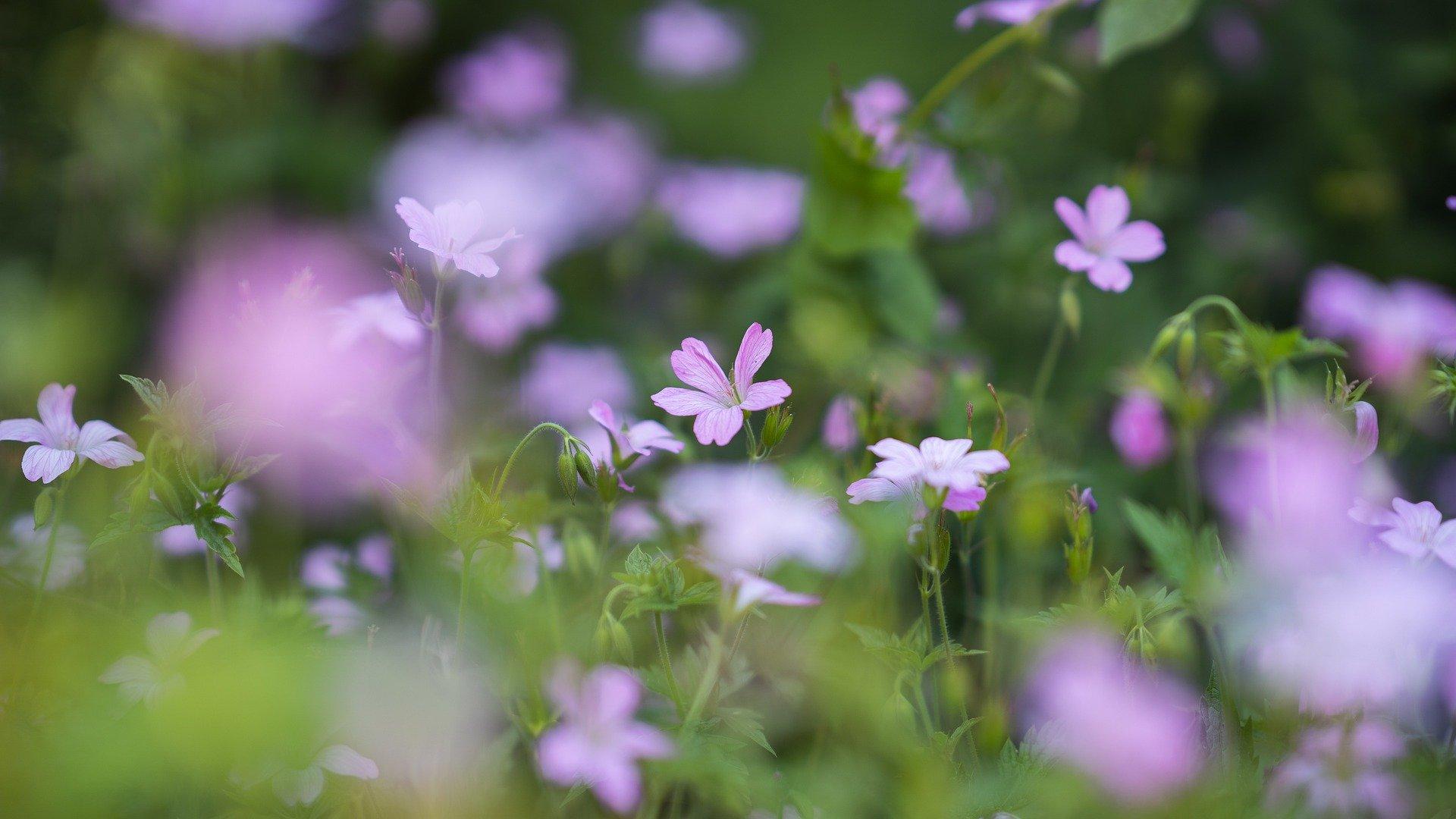 flowers 5357740 1920