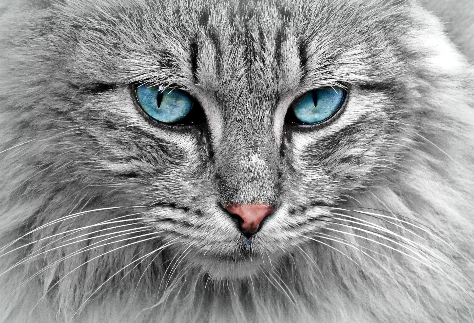 cat 1045782 1920