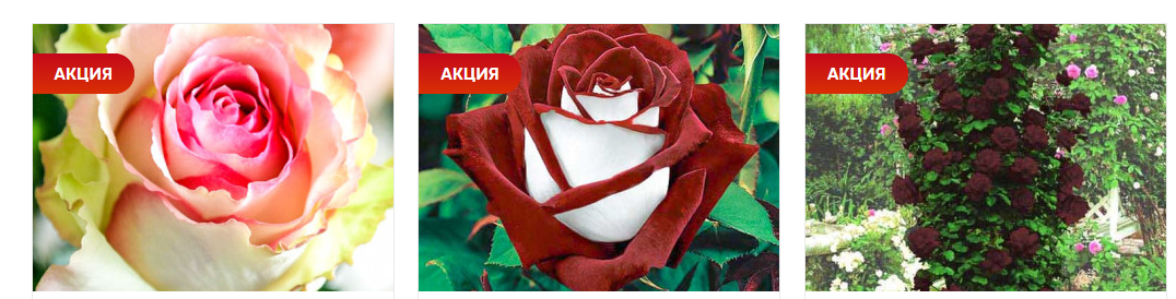 Какие цветы дарить маме, девушке, женщине