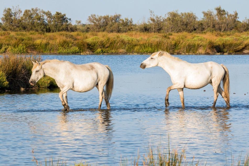 horses 2591486 1920