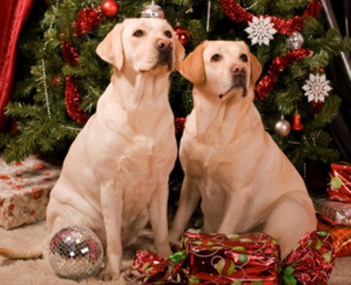 Как украсить квартиру на год собаки 2018