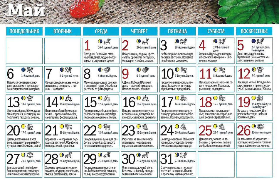 Посевной календарь на май 2019 года садовода и огородника